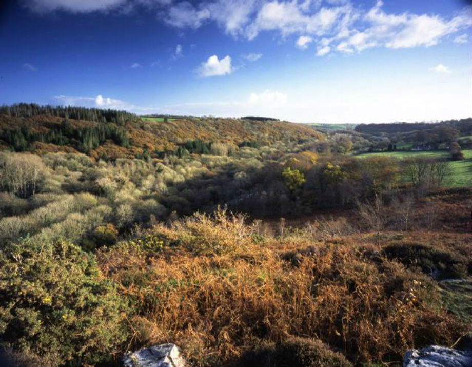 Treffgarne Gorge Pembrokeshire